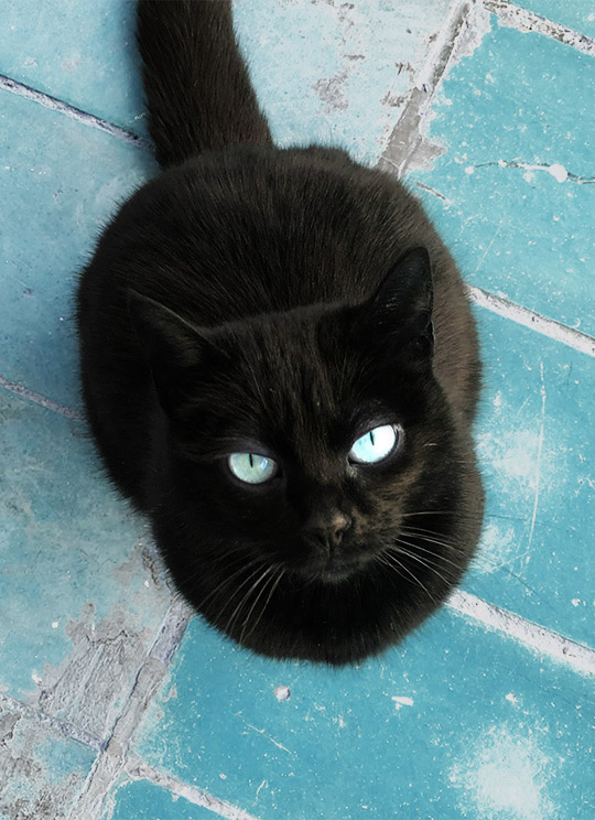 Dolly-Black-Cat